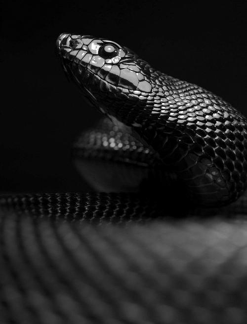snake | sakarovalexander